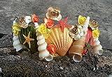 Colored Seashells Crown, costume Ariel, Mermaid hair accessories, Beach wedding jewelry