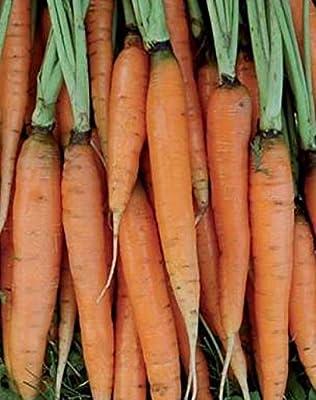 Nantes Half Long Carrot Seeds (Organic) Seeds UPC 600188197587 +1 Plant Marker