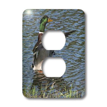 3d Rose 3dRose lsp_11537_6 Drake, Male Mallard Duck 2 Plu...