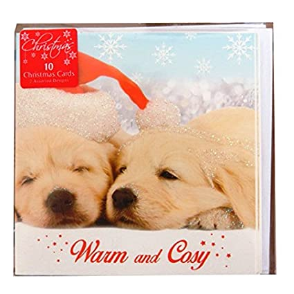 Cute Christmas Puppies.Amazon Com Glittered Christmas Cards Cute Labrador
