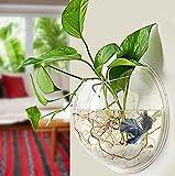 Wall Fish Tank Acrylic Wall Aquarium 1 Gallon Fish Bowl 11.5 Inch Home Decoration Pot