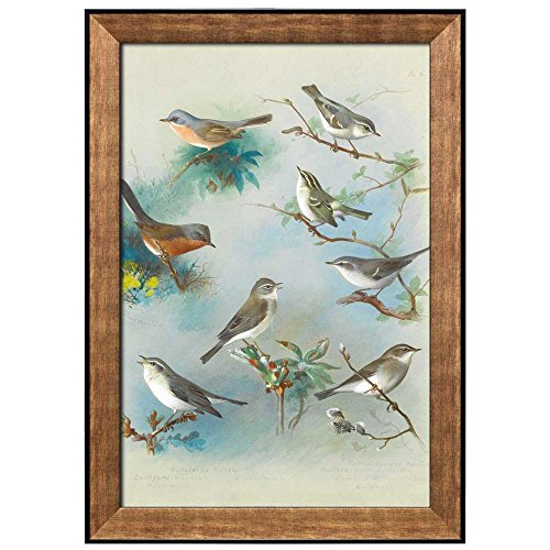 Beautiful Drawing of Various Birds Perched on Branches by Archibald Thorburn Framed Art