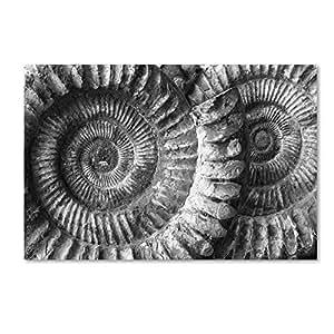 Trademark Fine Art Amonita 3 by Moises Levy, 22x32-Inch