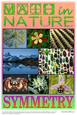 Amazon.com: Matemáticas en la naturaleza Cartel: Simetría ...