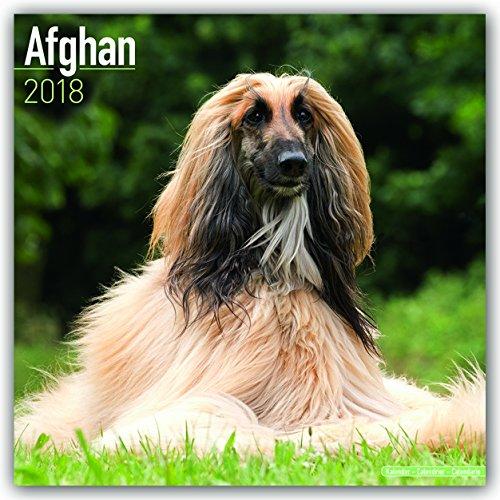 Afghan Hound Calendar - Afghan Dog Calendar - Dog Breed Calendars 2018 - Dog Calendar - Calendars 2017 - 2018 wall calendars - 16 Month Wall Calendar by Avonside