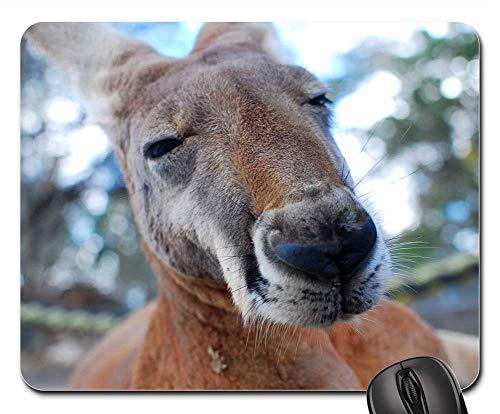 Mouse Pad - Kangaroo Marsupial Close Up Brown Fur Mammal (Macropod Animals)