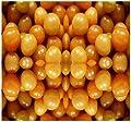 100 GROUND CHERRY SEEDS *CAPE GOOSEBERRY* SAUCES & PIE physalis family