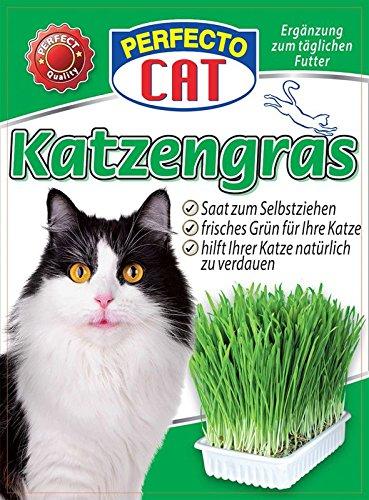Katzengras 100g - Saat zum Selbstziehen