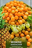 "Rare Organic vegetable Tomatillo seeds ""Physalis Pineapple"" 100 seeds."