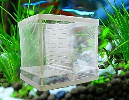 NicePets - Paridera doble de tela para peces alevines y criadero para acuario especialmente diseñado para aislar crias guppys: Amazon.es: Productos para ...
