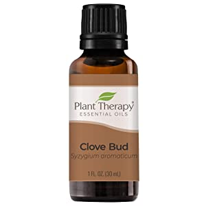 Plant Therapy Clove Bud Essential Oil 100% Pure, Undiluted, Natural Aromatherapy, Therapeutic Grade 30 ml (1 oz)