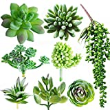 Dandevo 8 Pcs Unpotted Fake Succulent Plants Assorted Artificial Faux Plastic Greenery Stems in Bulk String of Pearls Hanging Plant Aloe for Centerpiece Terrarium Home Wall Decor Large and Small