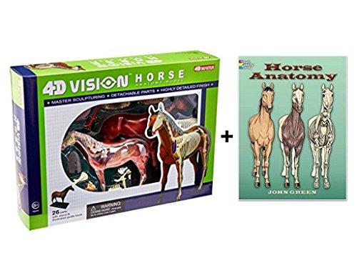 horse anatomy model - 3