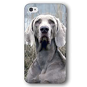 Weimaraner Dog Puppy For Ipod Touch 5 Case Cover Slim Phone Case