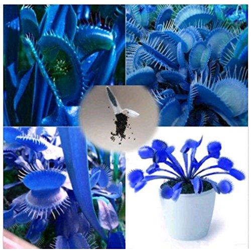 Delaman 100Pcs Dionaea Potted Rare Venus Flytrap Flower Seeds Bonsai Carnivorous Muscipula Giant Clip Venus - Pokemon Pearl Rare