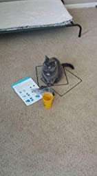 Can You Take Apart A Cat Tower