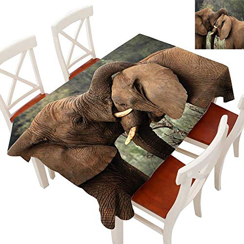 WinfreyDecor Flow Spillproof Fabric Tablecloth Tablecloth Thick Original Restaurant Two Wild Savanna Elephants Wrestling Cute Nature Icons South African Animals Photo Brown Green 60