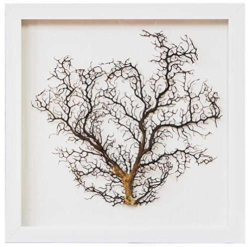 (Pacific Coastal Collection Framed Sea Fan 20
