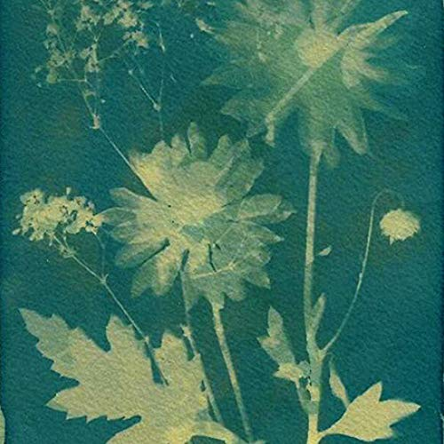AVA Prime Sunprint Cyanotype Paper, Nature Printing Kit,8.2'' x 11.4'' A4 12-Sheets Sun Activated (4# Green Back)]()