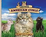Amazing American Curls, Katherine Hengel, 1617148296