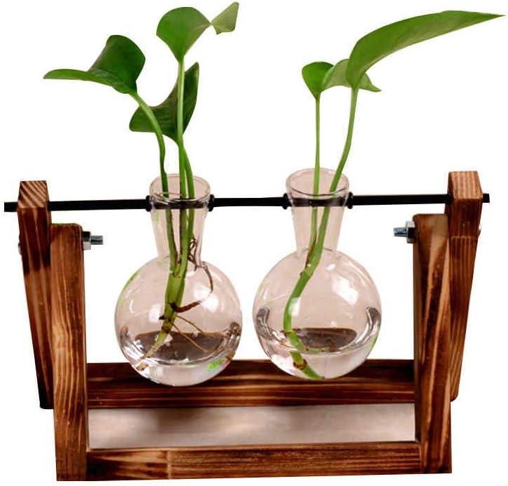 Tubayia Vase de Fleurs D/ôme en Verre Transparent Micro Paysage Terrarium avec Base en Bois pour Maison D/écoration