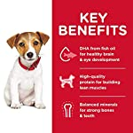 Hills-Science-Diet-Dry-Dog-Food-Puppy-Small-Bites-Chicken-Meal-Barley-Recipe-155-lb-Bag