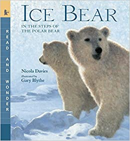 Image result for ice bear book