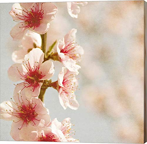 - Spring Whispers 4 by Jessica Rogers Photography Canvas Art Wall Picture, Gallery Wrapped with Image Around Edge, 9 x 9 inches