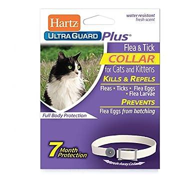 Amazon.com: Sargentos cuidado de mascotas Prod 03282 gato ...