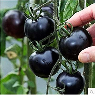 Package 200 Pcs Black Pearl Tomato Seeds, Balcony Vegetables, Tomato Plant Seeds : Garden & Outdoor