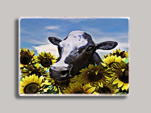 (Cow in Sunflowers Refrigerator Magnet)