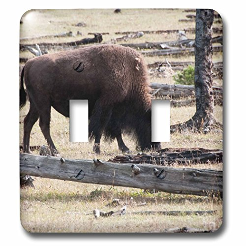 Bison Grass - 3dRose Jos Fauxtographee- Bison Grazing - A Bison grazing on grass in Yellowstone National Park - Light Switch Covers - double toggle switch (lsp_266363_2)