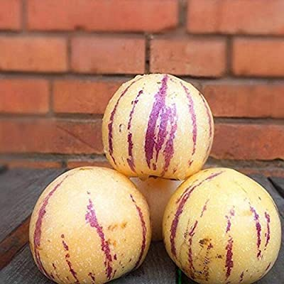 Asatr 20pcs/Bag Rare Melon Seeds Bonsai Planting Fruit Melon Seeds Home Garden Bonsai : Garden & Outdoor