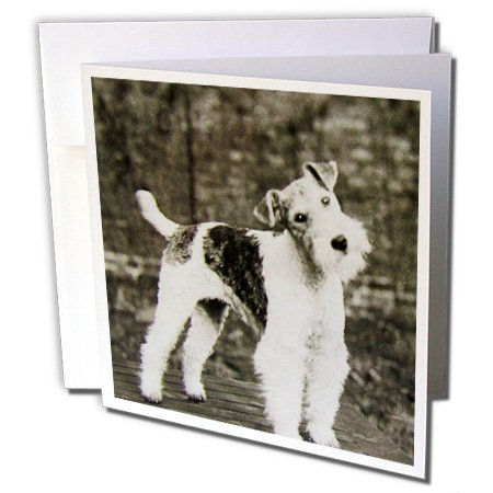 - Scenes from the Past Magic Lantern - Vintage Wire Hair Fox Terrier Dog Circa 1900 Edwardian Era - 6 Greeting Cards with envelopes (gc_246098_1)