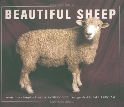 wool photography print spring barblassa portrait fine art sheep fleece photo Lambs hay Wisconsin