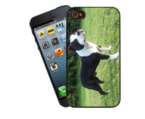 Staffordshire Bull Terrier étui pour téléphone portable design, 15–Housse pour Apple iPhone 5/5C/5S/