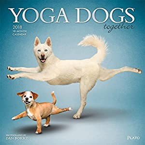 Yoga Dogs Together 2018 12 x 12 Inch Monthly Square Wall Calendar by Plato with with Foil Stamped Cover, Animals Humor Dog (English, French and German Edition)