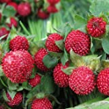 Outsidepride Strawberry Indian - 5000 Seeds