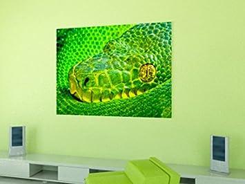 Serpientes - Víbora De Palma Verde, Bothriechis Lateralis II Fotomural Autoadhesivo (180 x 120cm): Amazon.es: Hogar