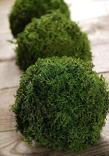 Richland Green Reindeer Moss 4'' Balls Set of 3