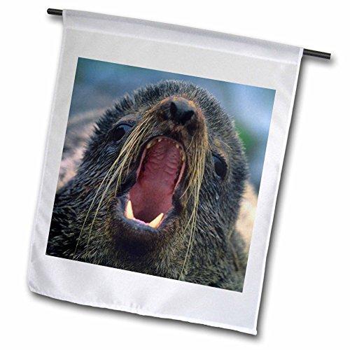 3dRose Danita Delimont - Seals - Northern Fur Seal, Callorhinus ursinus, California, USA - 12 x 18 inch Garden Flag (fl_259037_1) - Northern Fur Seal