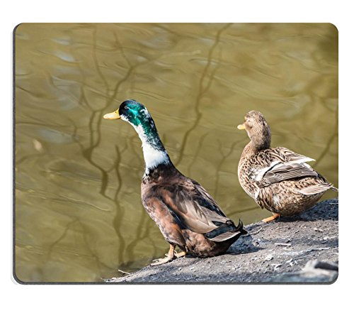 Darling Pedestal - Liili Mouse Pad Natural Rubber Mousepad ducks stand ashore Photo 19600557