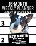 16 Month Weekly Planner January 2018-April 2019 - Most Wanted Blue Heeler: Daily Diary Monthly Yearly Calendar Large 8.5