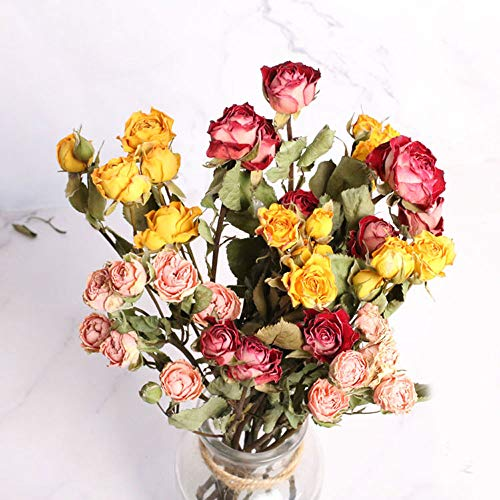 TooGet Natural Rose Dried Flowers Rose Bouquet Bundles, Real Freshly Harvested Dry Flower Bunch DIY Crafts Gift Arrangements and Decorate for Desktop, Living Room, Coffee Store, Wedding (Mixed Color)