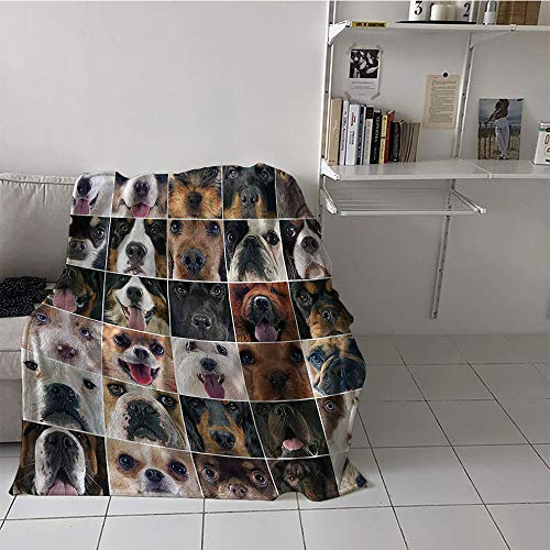Children's blanket throw/travel Digital Printing Blanket (50 By 70 Inch,Dog Lover Decor Collection,Dogs Studio Shot Chihuahua Chow Chow Cocker Spaniel Poodle Purebred Sheepdog,Brown Black ()