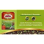 Semi-di-prato-Substral-Reseeding-Prato-per-la-semina-Semi-di-prato-Riparazione-del-prato-resistente-alla-germinazione-rapida-Miscela-di-colore-verde-a-Feci-di-uccelli-1-kg-per-50-m