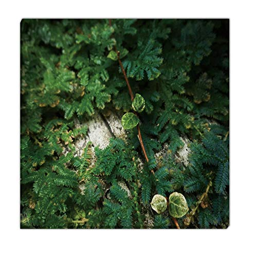 Hitecera Fern Selaginella sp Living Room Wall Decor,170151 Christmas Pictures for Wall,12x12in (Selaginella Fern Christmas)
