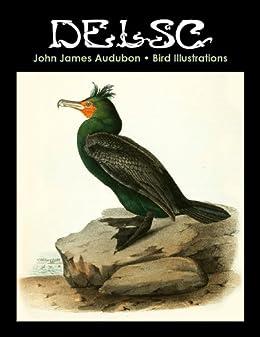 John James Audubon Bird Illustrations by [Widmann, Melanie Paquette]