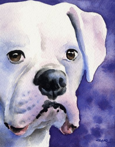 White Boxer Art Print by Watercolor Artist DJ Rogers ()