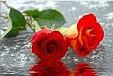 Glass Wall Art Acrylic Roses on the Water, 5 Stars Gift Startonight 23.62 X 35.43 Inch